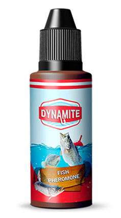 Dynamite Fish, forum, recensioni, opinioni
