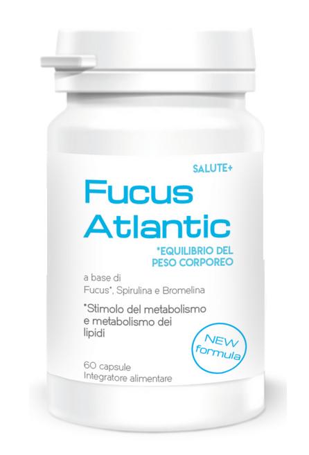 Fucus-Atlantic