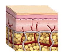 Mezoderma, crema viso, come si usa, ingredienti, composizione, funziona