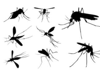 Pest Away, controindicazioni