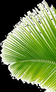 Coconut Black, effetti collaterali, controindicazioni