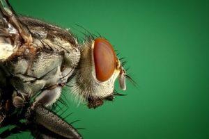Pest Away Mini, opinioni, recensioni, forum, commenti