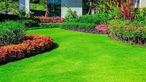 Perfect Grass, amazon, dove si compra, prezzo