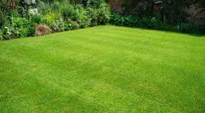 Perfect Grass, effetti collaterali