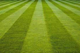 Perfect Grass, funziona, come si usa