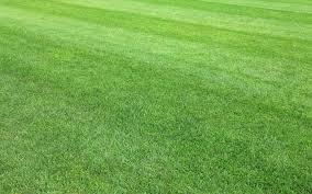 Perfect Grass, originale, Italia