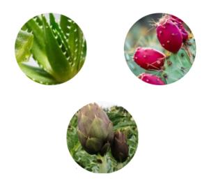 Aloe PhytoComplex, come si usa, composizione, funziona, ingredienti